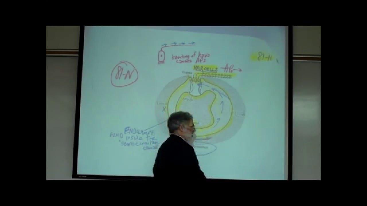 VESTIBULAR APPARATUS; the Anatomy & Physiology of Balance ...