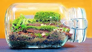 HOW TO MAKE BIG ENTERNAL TERRARIUM