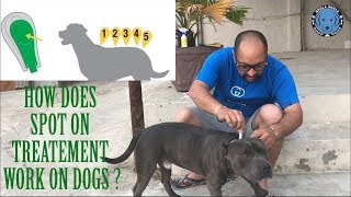 Ticks. Fleas. Lice & Mites || How Does Spot On Treatement Work On Dogs ?
