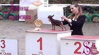 Выставка собак всех пород в г.Ростове-на-Дону 16.10.16г.Dog show  in Rostov-on-don 16 Oct 2016.