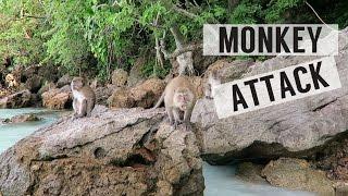 MONKEY ATTACK IN THAILAND!