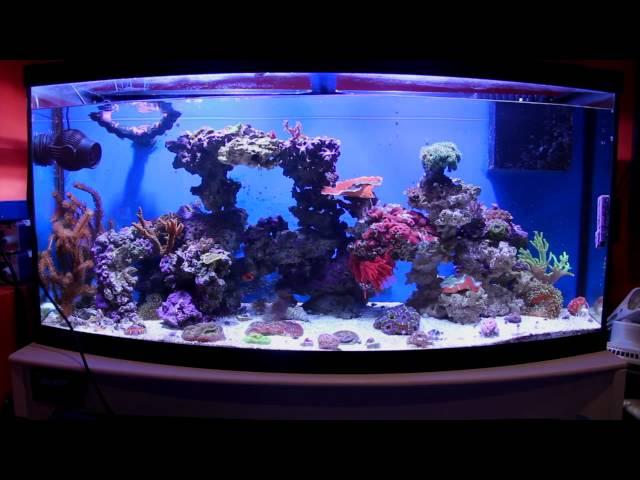 Fish & Aquariums Jebo Zp5000 Wave Maker For Aquariums Wave Maker Will Fit All Aquarium Fish Tanks