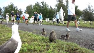 Start of the 5th Annual Midway Atoll 5-K - 2012