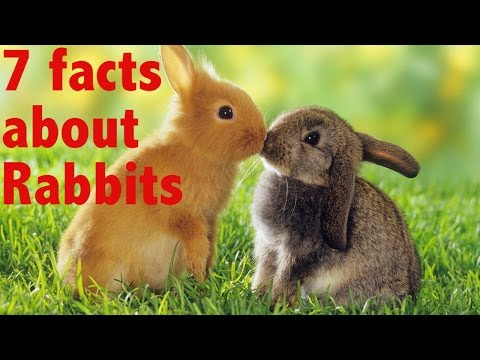 7 facts about Rabbits - YouTube