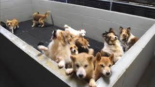 人気のペット犬などを過密状態で飼育し、繁殖させていたとして、福井県...