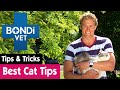 How To Ensure Your Cat Has Nine Lives | Bondi Vet Pet Tips