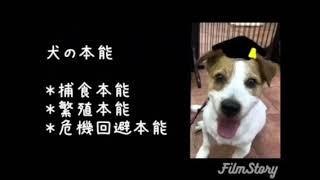 犬の本能は3つあります。 その中でも捕食本能について、説明しました!