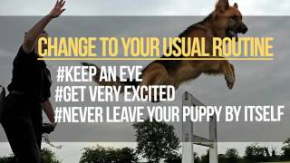 How Long Does it Take to Potty Train a Puppy? – Are You Doing it Right?