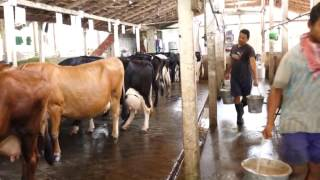 Anna Farm in Thrissur is setting a model in Dairy Farming.....