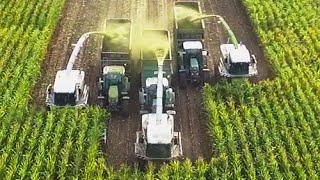 3 x CLAAS JAGUAR Lohnunternehmen Appel beim Mais häckseln
