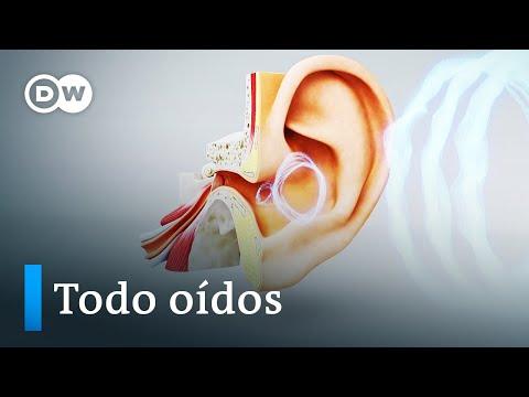 El oído, un supersentido