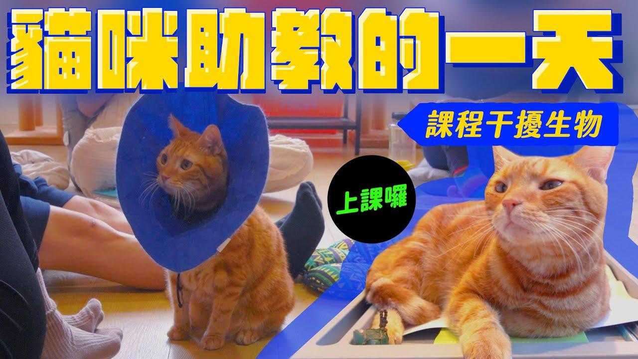 貓咪瘋狂騷擾學員上課!拉姆的新秘密|宇宙猫咪🐾