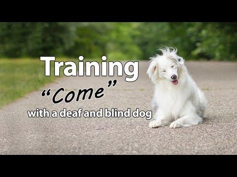 Deaf/Blind Dog Training - 'Come'