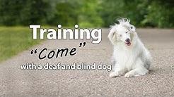 """Deaf/Blind Dog Training - """"Come"""""""
