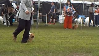 2018年7月16日熱海愛犬クラブ展 ポメラニアンの一部動画です。