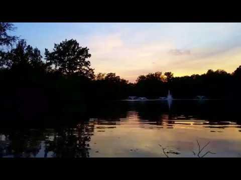 Drobiowy Timelapse - timelapse with ducks - Park Południowy, Wrocław, Poland