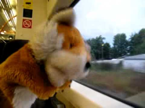 Foxy on the Train from Angmering to Barnham - 15th...