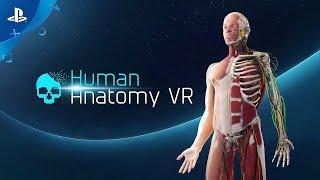 Human Anatomy   Trailer   PSVR