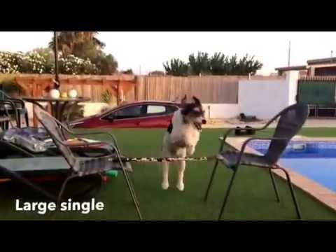 Dog jumping montage
