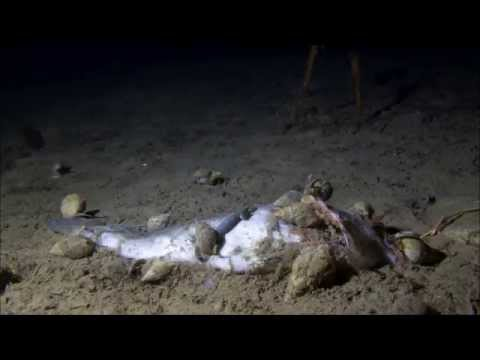 Atlantic cod decomposition - Winter