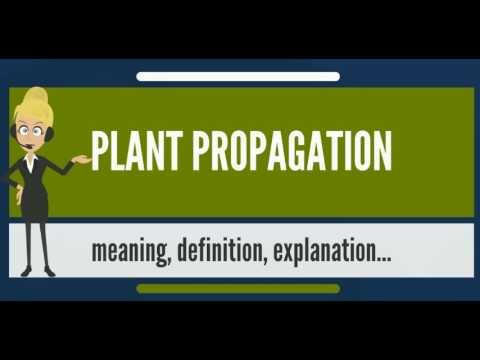 Definition of asexual propagation