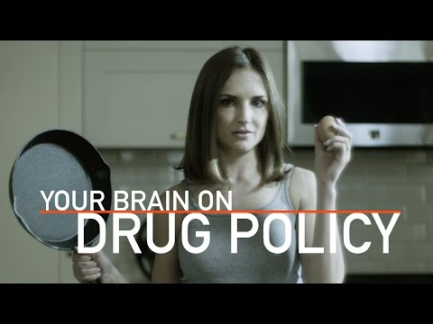 Your Brain On Drug Policy  Rachael Leigh Cook 2017