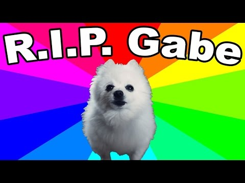 gabe-the-dog-died!-remembering-the-bork-king-(thoughts-and-tribute)