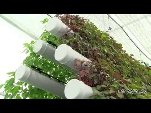 SURE GROW Soilless Hydroponics Hi tech Farm at Coimbatore on Dinamalar NEWS