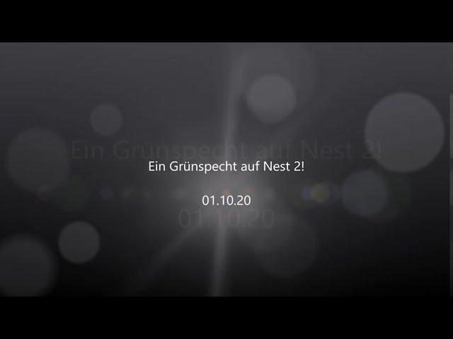 Ein Grünspecht auf Nest 2! 01.10.20