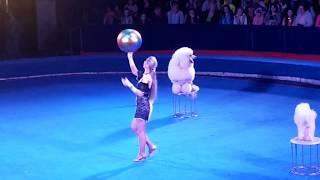 Милые дрессированные собаки Цирк Радуга