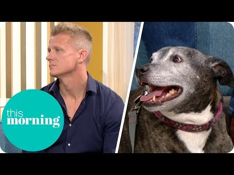 Are the Owners Responsible After a Dangerous Dog Attack? | This Morning