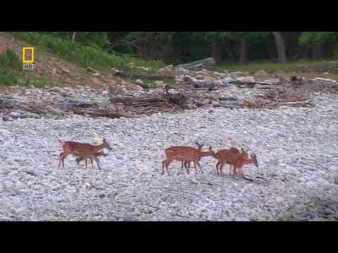 Тайга дикая природа  документальные фильмы  Nature