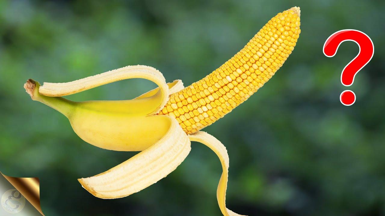 WORLD'S MOST WEIRD VEGETABLES AND FRUITS 🥕🍎 | FUN GARDENING
