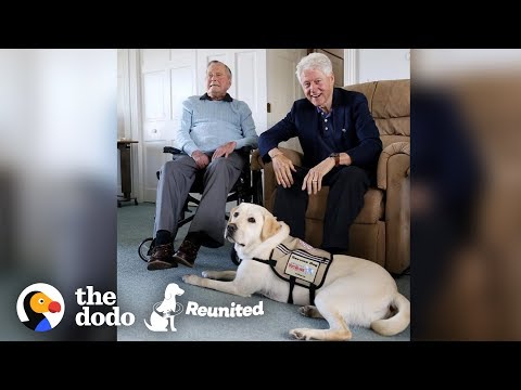 Heather Burnside - Paw Purr Azzi: President GHW Bush's Service Dog Is Happy To See His Mom