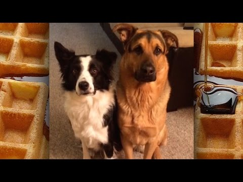 Cute Dogs & Cats – Animals are Amazing – Dog Adoption