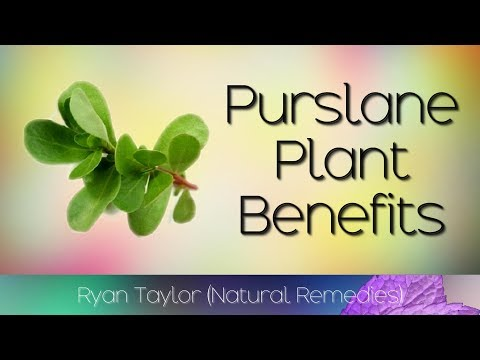 Purslane: Benefits and Uses