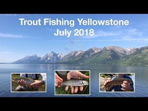 Trout Fishing Yellowstone July 2018
