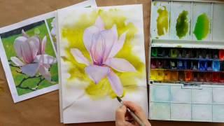 magnoliya mini