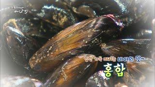 자연산&양식홍합, 참담치&지중해담치 [어영차바다야]