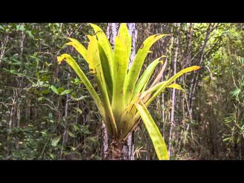 Kuba-Humboldt-Nationalpark