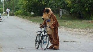 Медведь на велосипеде(Работаю в детском развлекательном шоу