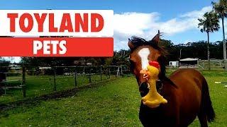 toyland-pets