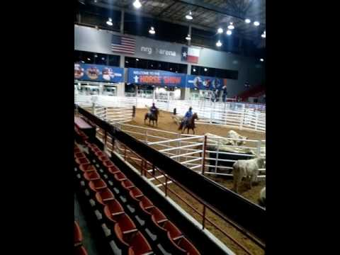 Ranch Sorting Competition At Nrg Arena Houston Livestock
