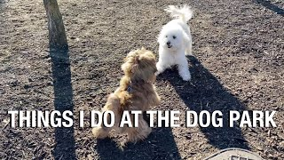 What dogs do at the dog park? // Puppy visits dog park | Piedmont Park | Atlanta dog park
