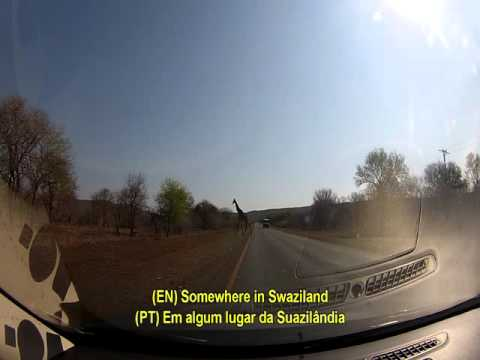 South Africa Road Trip - Swaziland: A Giraffe crossing the road