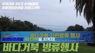 [대외활동] 아라미 9월 콘텐츠 :: 제주 바다거북방류…