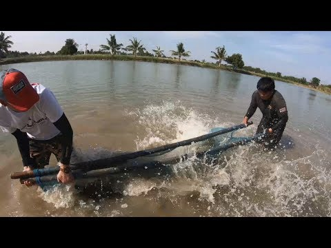 Mission Impossible: Fishing For Monster Giant Arapaima Pirarucu. Рыбалка: Арапайма Пираруку.