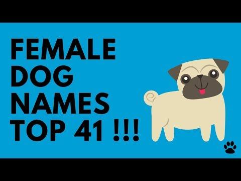 Female Dog Names - Top 41 Best Ideas | Names