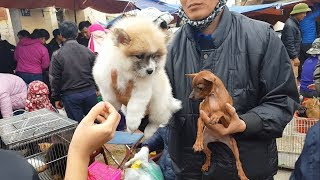 The market sells pet dogs and cats with the most beautiful and cheapest dog breeds