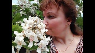королеве Танюше из города Усть-Кут от Томаса Андерса и Омида(, 2013-12-19T14:01:14.000Z)
